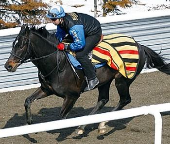 3歳馬で最後の入厩☆シルクルーパス